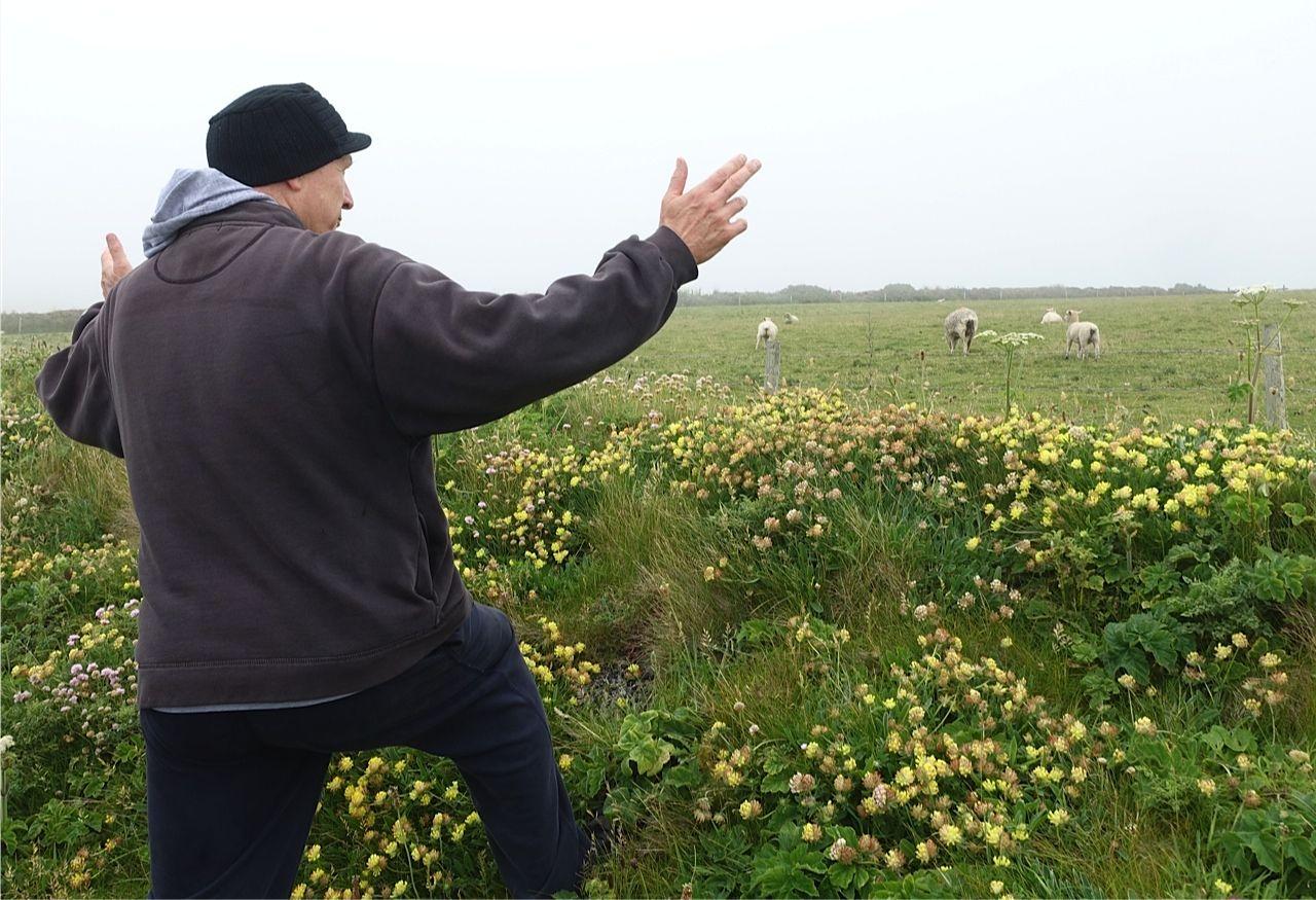 Matt talking to sheep in Cornwall. (Photo: John Mahon)